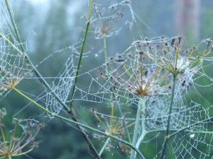 best spiderwebs