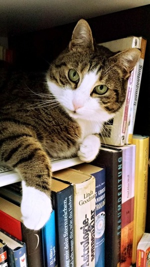 cat in literature